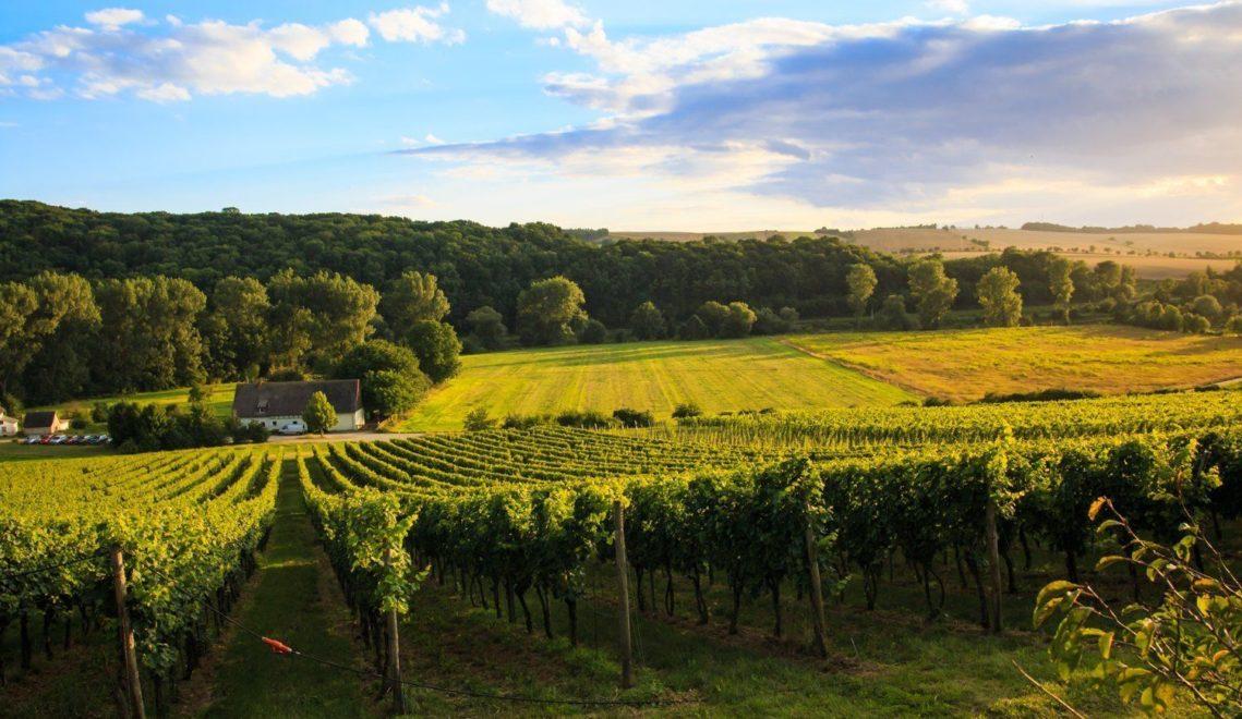 Die Weinberge der Familie Zahn-General fangen direkt hinter dem Weingut an © Melf Mäder / CMR