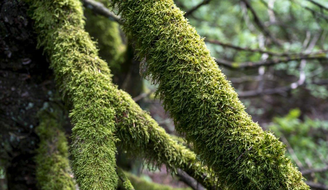 Ein Auge für die Details: moosbewachsene Äste im Thüringer Wald © Gregor Lengler / Thüringer Tourismus GmbH