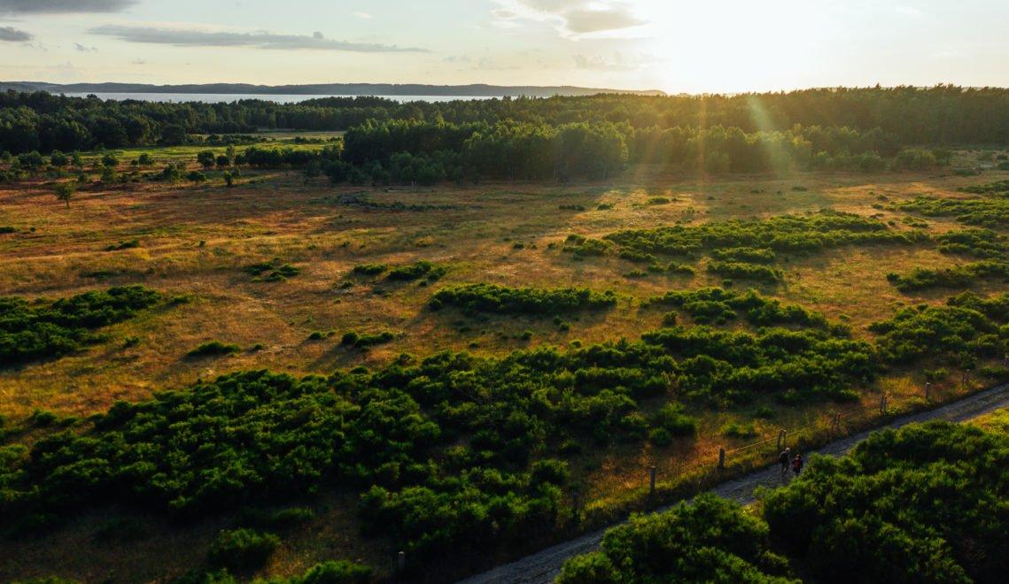 Die Natur hat sich das einstige Truppenübungsgelände von Prora zurückgeholt © TMV/Gänsicke