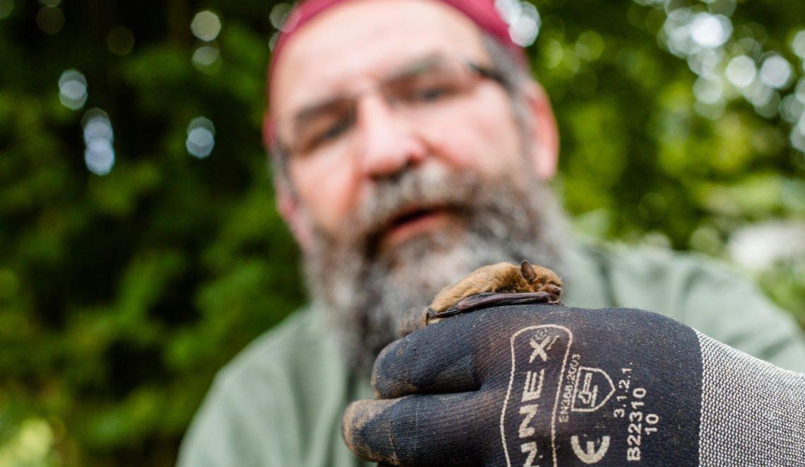 Fledermäuse zählen zu den nützlichen Bewohnern des Waldes © TMV/Kirchgessner