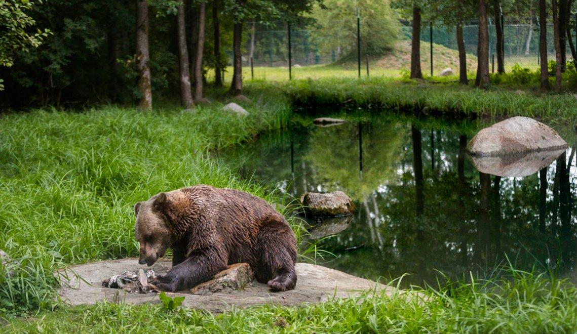Bei Dämmerung verlassen die Tiere ihre Schlafplätze und gehen auf Nahrungssuche © xxx