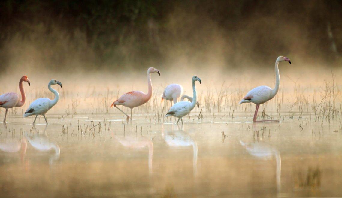 Wie gemalt: Flamingos im Münsterland. Das Zwillbrocker Venn ist ein Vogelschutzgebiet © Biologische Station Zwillbrock