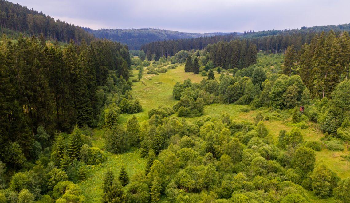 Siehst du den schmalen Wanderpfad ganz hinten rechts, unter den Tannen? Da im Elberndorftal könntest du jetzt unterwegs sein… © Tourismus NRW e.V.