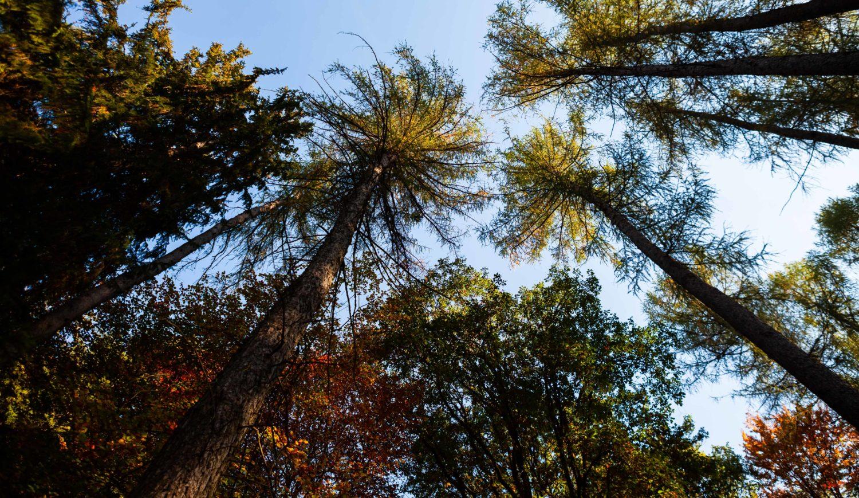Wenn der Herbst das Laub färbt, ist es im Arnsberger Wald im Sauerland besonders stimmungsvoll © Tourismus NRW e.V.