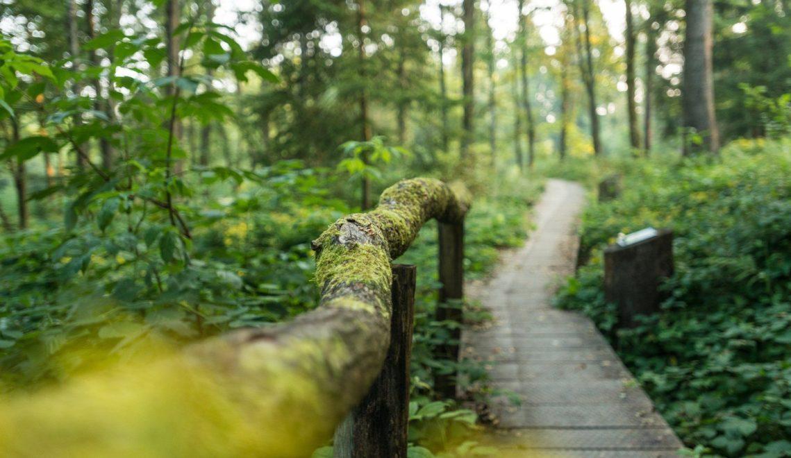 Frieden, Stille, Vogelgesang: Ein Holzsteg führt zum Quelle der Sieg. Mitten im Wald, natürlich: © Tourismus NRW e.V. - Dominik Ketz