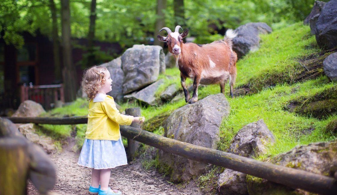 He du da! – im Tierpark und Zoo machen Kinder neue Bekanntschaften © famveldman - Fotolia
