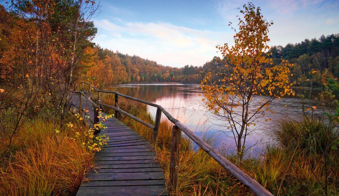 Im Müritz-Nationalpark kann man wunderbar durch die Seenlandschaft Mecklenburg-Vorpommerns wandern © TMV/Allrich
