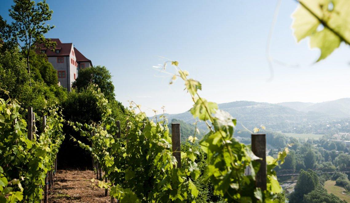 Bis heute wird hier auch Wein angebaut © Thüringer Tourismusverband Jena-Saale-Holzland e.V./J. Hauspurg