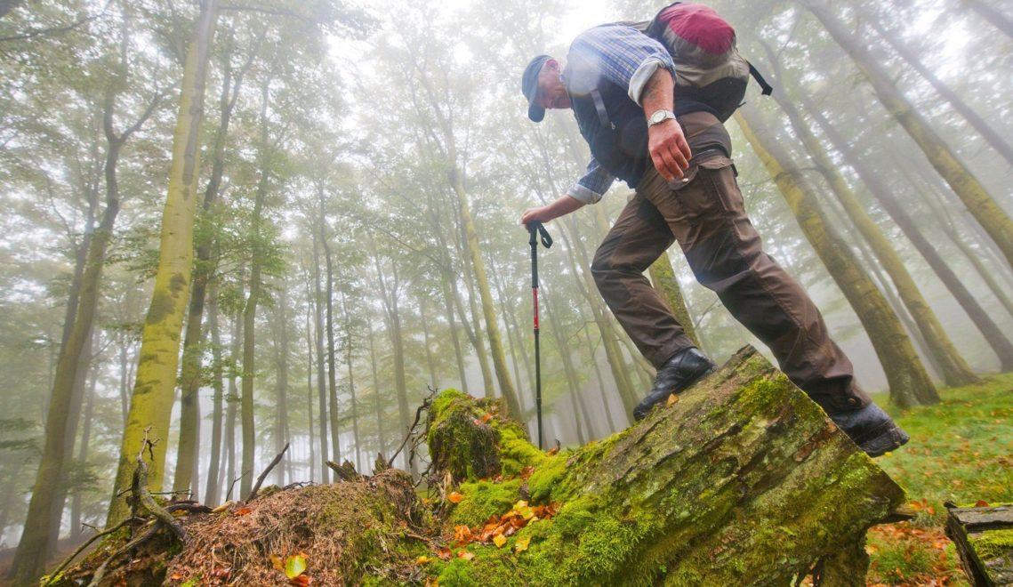 Durch die Wälder der Eifel lässt es sich ungestört wandern © Oliver Franke, Tourismus NRW e.V.