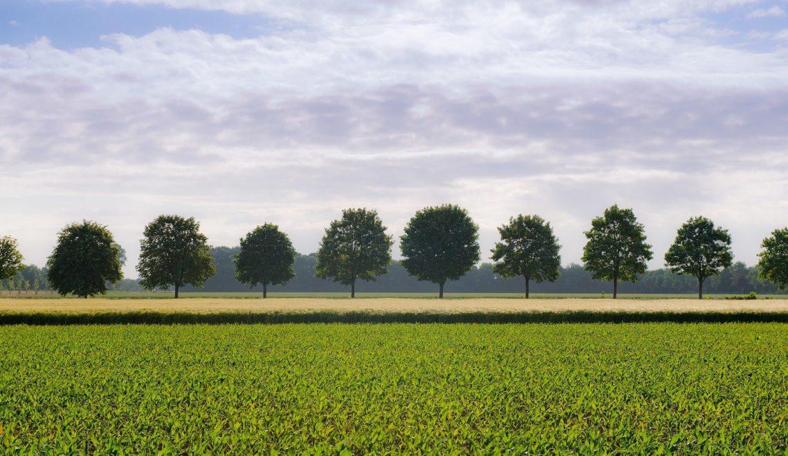 Baumalleen und grüne Felder säumen die Straßen im umliegenden Münsterland © Oliver Franke, Tourismus NRW e.V.