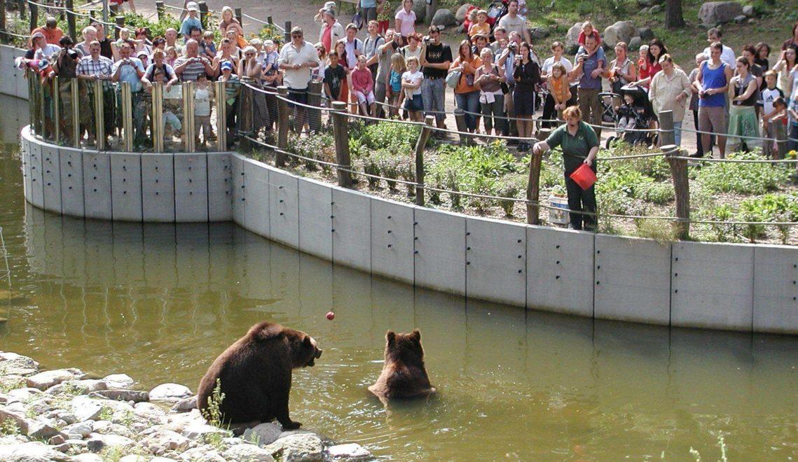 Bären Freddy und Frode © Wildpark-MV