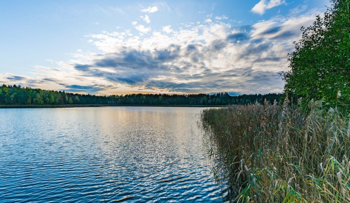 Rund um die Seen der Schorfheide haben auch vom Aussterben bedrohte Tierarten eine sichere Heimat gefunden © TMB-Fotoarchiv/Steffen Lehmann