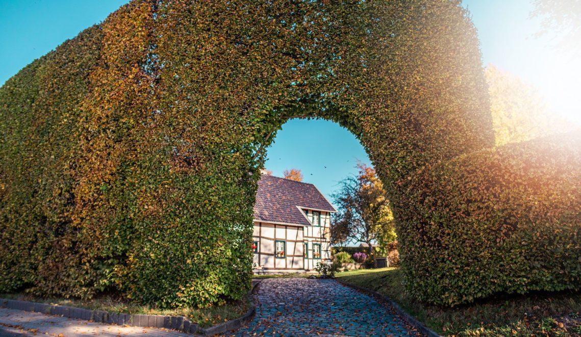 Auch das findet man in der Eifel: Meterhohe Buchenhecken © Tourismus NRW e.V.