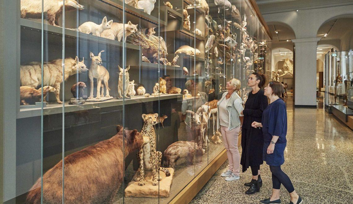 Auch eine umfangreiche naturkundliche Sammlung gehört zum Hessischen Landesmusuem in Darmstadt © floriantrykowski.com