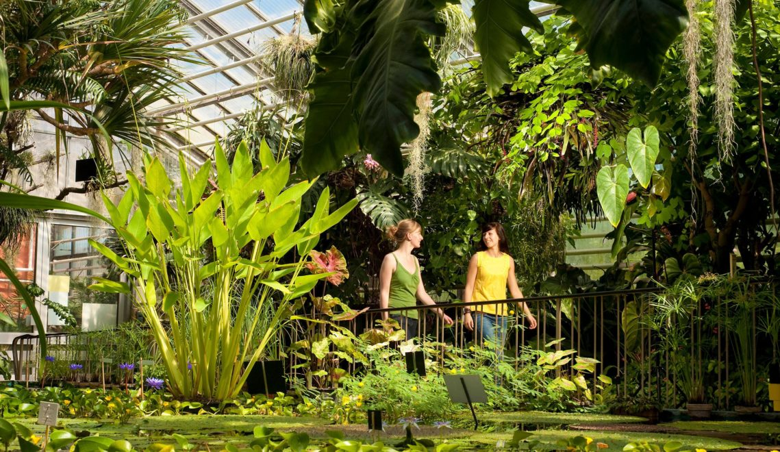 Etwa 10.00 Pflanzenarten aus aller Welt gedeihen in Jenas Botansichem Garten © JenaKultur, Foto: A. Hub