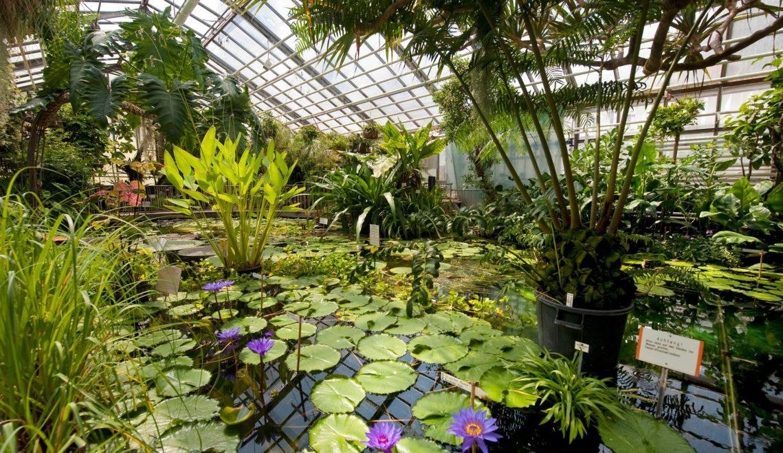 Ausflug nach Südostasien gefällig? Dann ab an die Teichlandschaft im Gewächshaus des Botanischen Gartens © JenaKultur, A. Hub