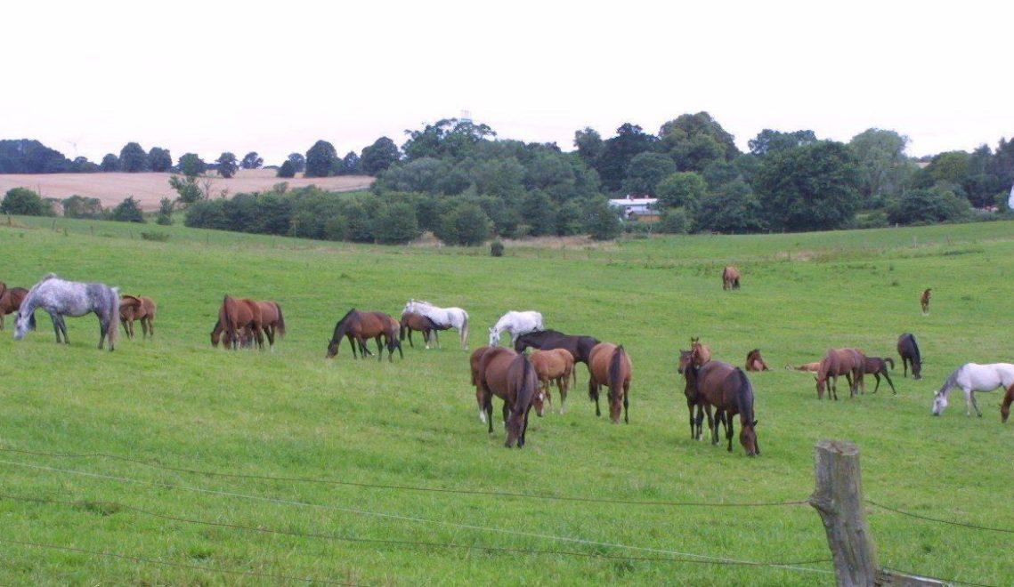 Pferde auf der Weide © Gestüt Ganschow