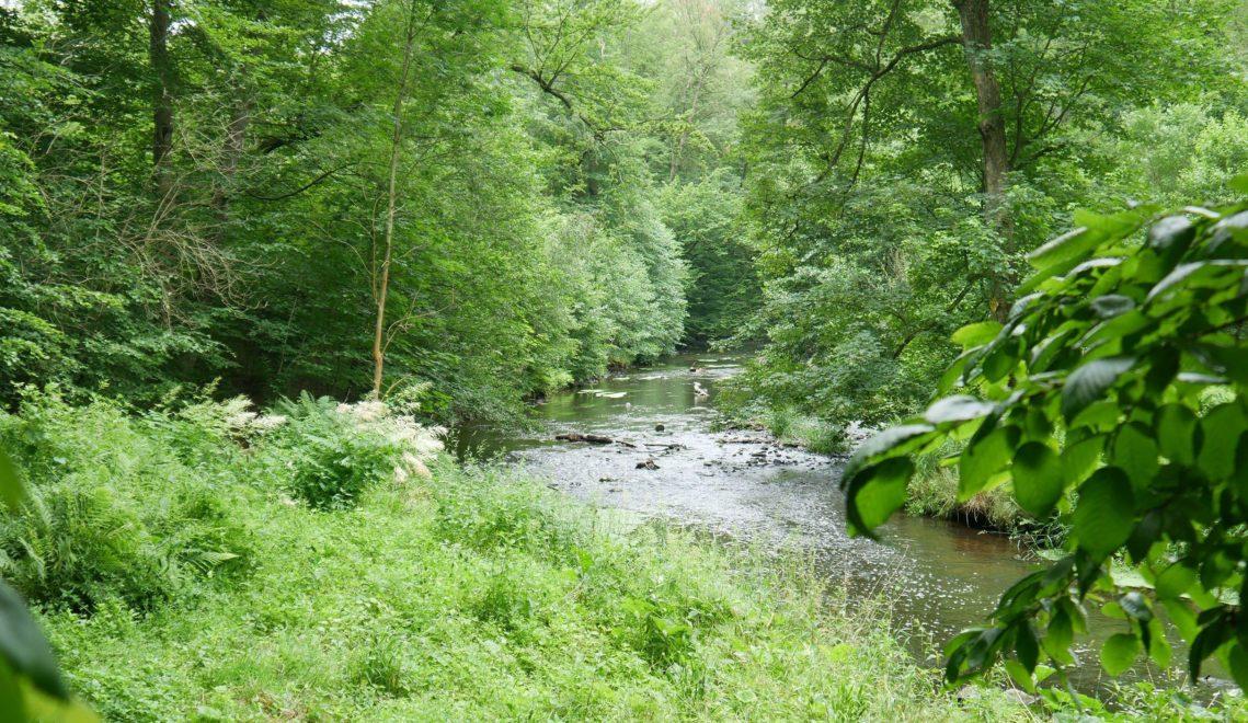 Das Seifersdorfer Tal ist ein beliebtes Ausflugsziel für empfindsame Naturliebhaber © Pascal Sobeck