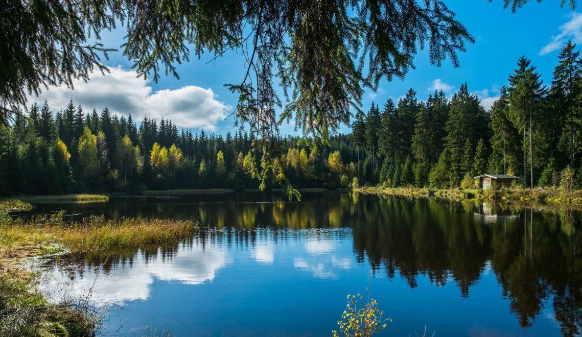 Der Sauteich gehört zum weit verzweigten historischen Floßgrabensystems im Vogtland, in dem man früher das Holz abschwemmte © Klaus Hurtienne/Wandermagazin