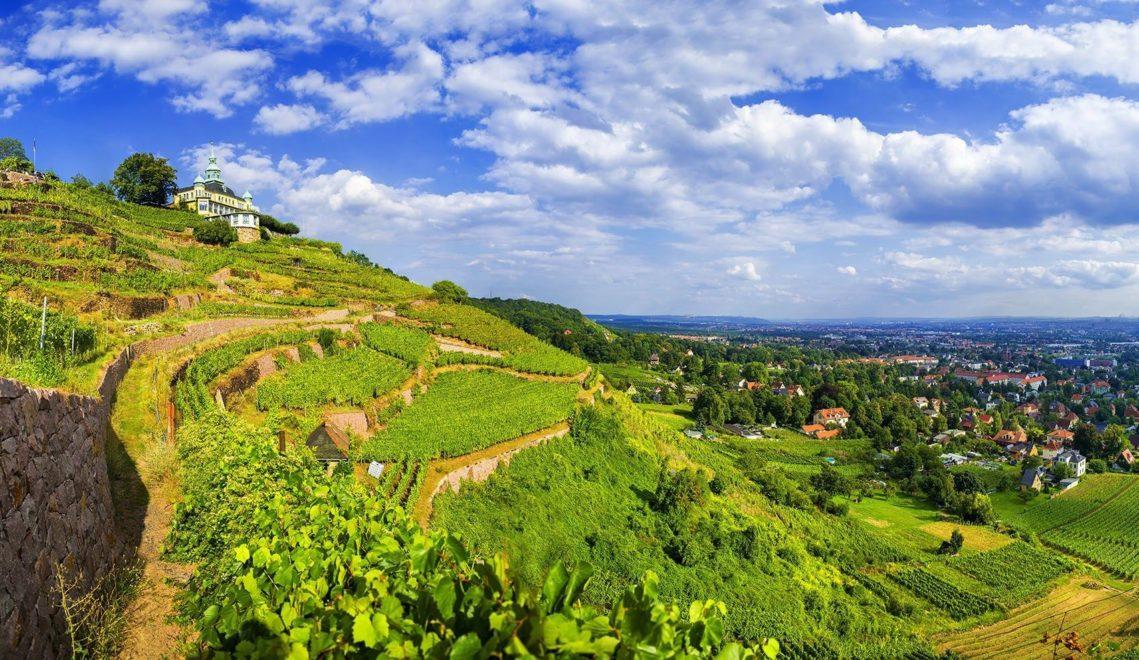 Die Route führt durch die Radebeuler Weinberge ©TVED/Sylvio Dittrich