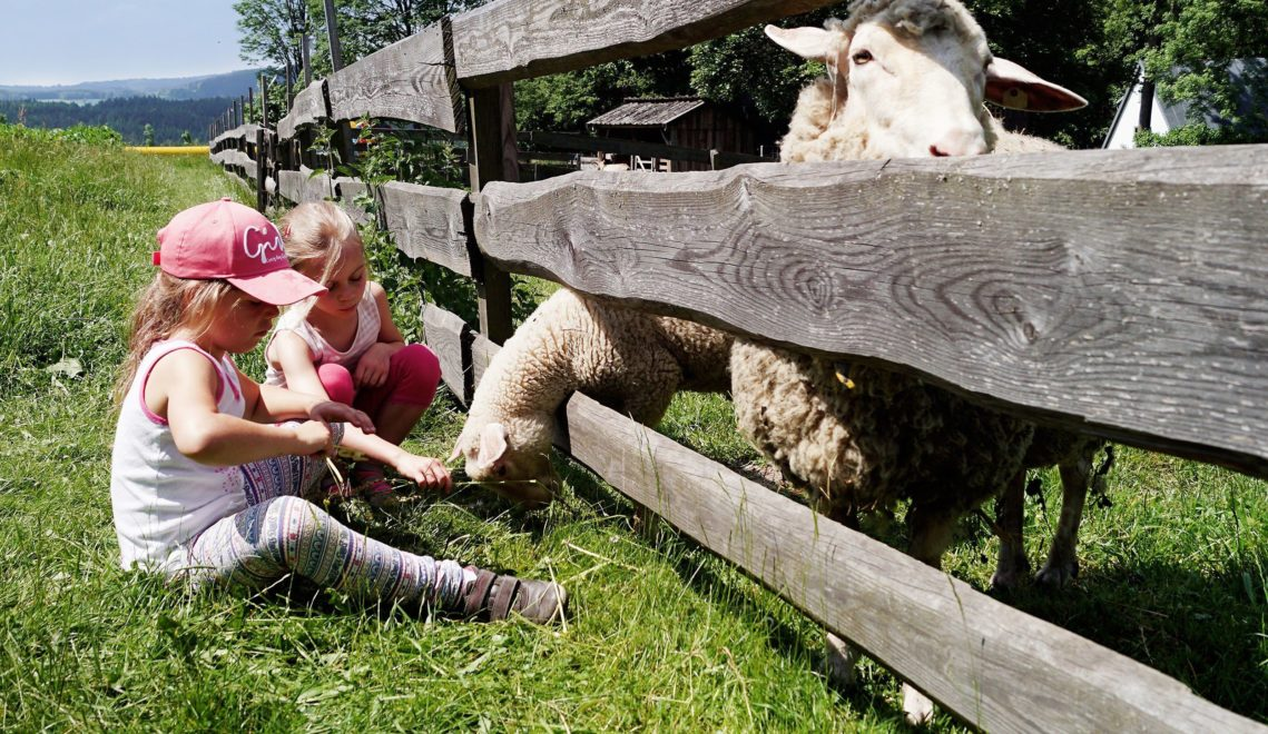 Leben auf dem Bauernhof – so fühlt sich ein Besuch im Freilichtmuseum Landwüst an © Vogtland Kultur GmbH