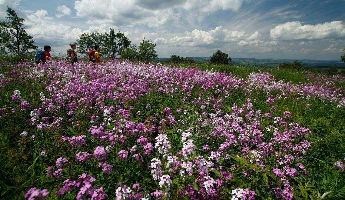 Im Frühjahr und Sommer verwandelt sich das Erzgebirge in ein Blütenmeer © Ingo Hübner