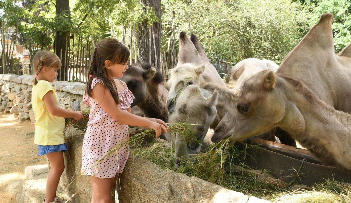 Im Zoo Görlitz erleben die Kids Tiere hautnah © Zoo Görlitz