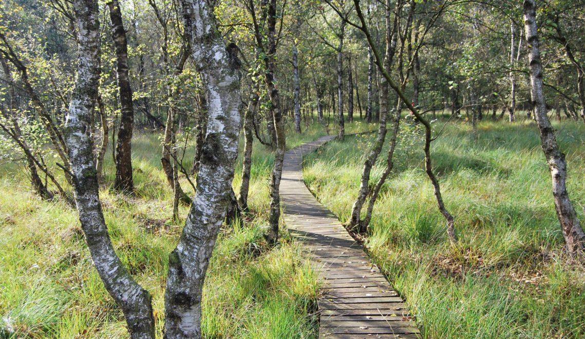 Mancher kunstweg wurde selbst zu einem Weg, hier durch das Moor