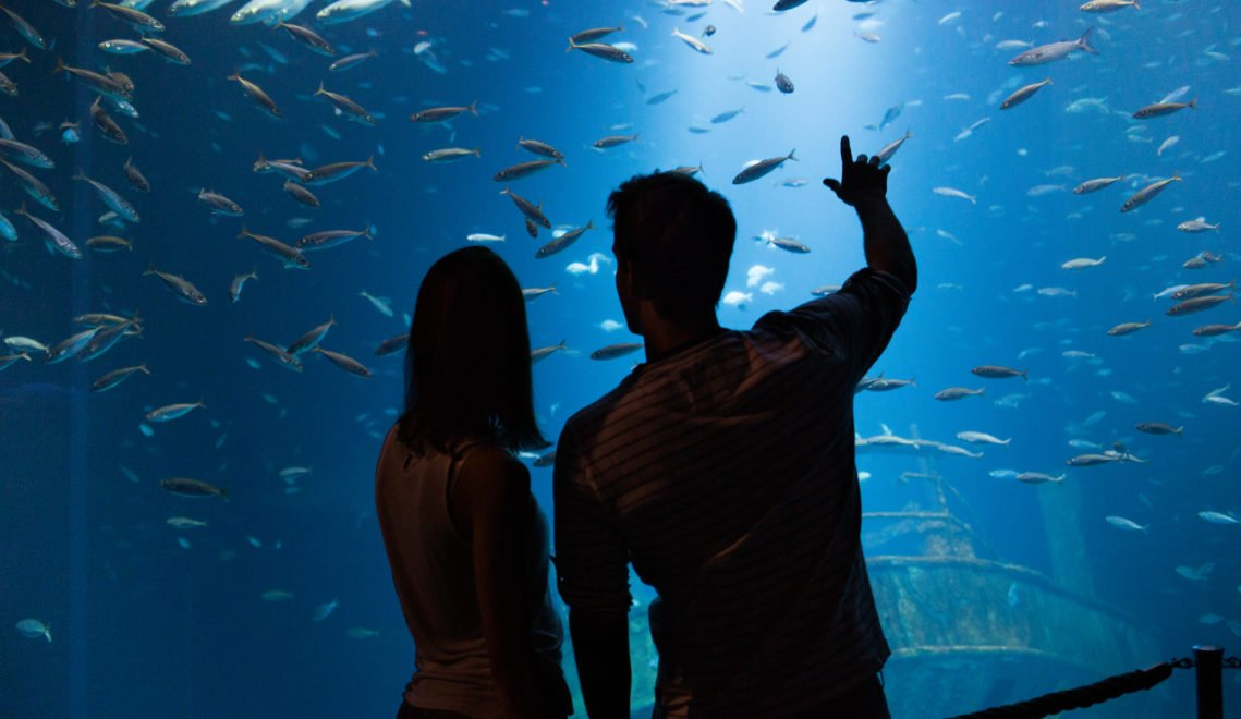 Das größte Aquarium des OZEANEUMs fasst 2,6 Millionen Liter Wasser. © TMV/Kirchgessner
