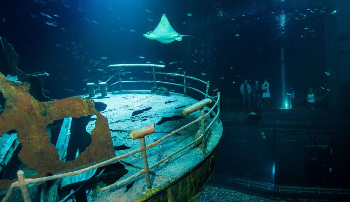 Schiffswrack im Ozeaneum in Stralsund