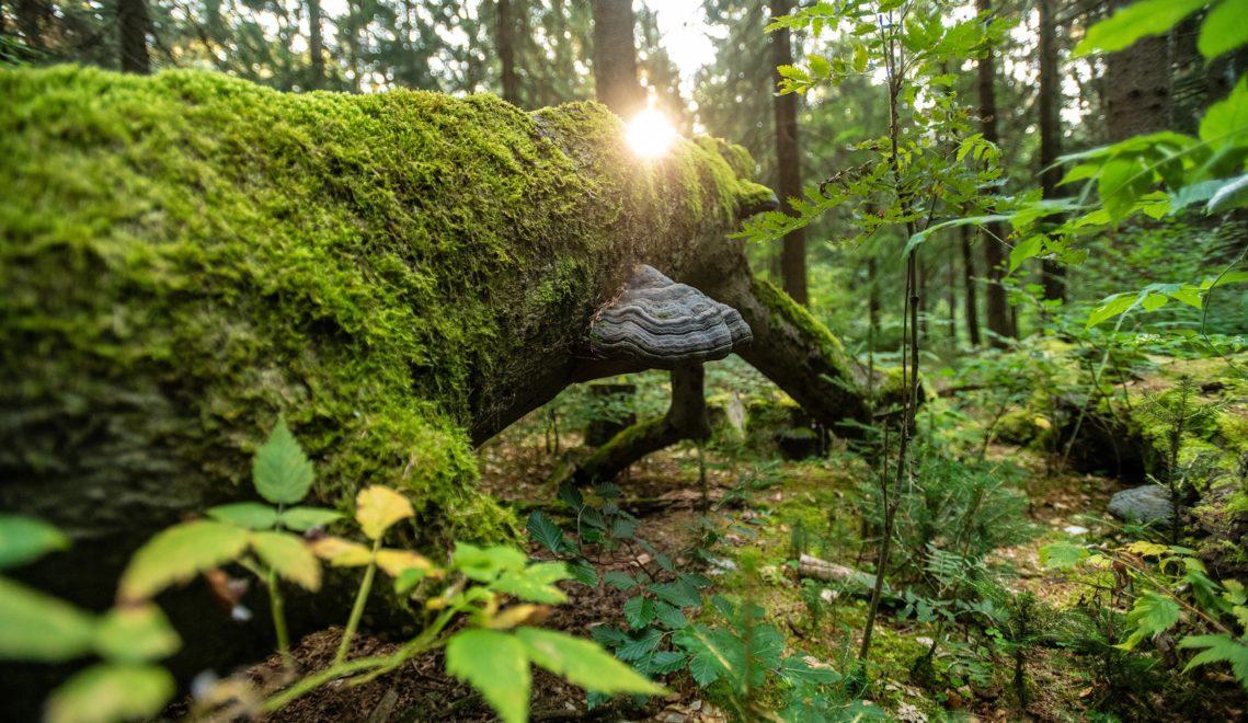 Blick in die unberührte, märchenhafte Natur in der Kernzone © Dominik Ketz