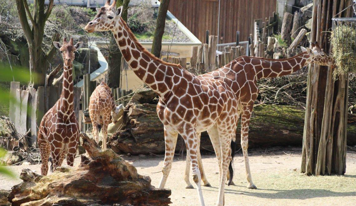 Etwa 290 Tierarten sind im Osnabrücker Zoo zuhause © Zoo Osnabrück