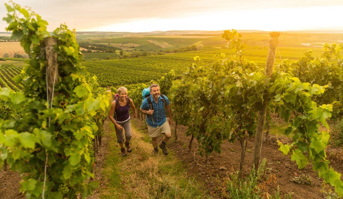 Rund um Mainz gedeihen hervorragende Weine, die ihr beim Weinwandern verkosten könnt © Dominik Ketz / Rheinhessen-Touristik