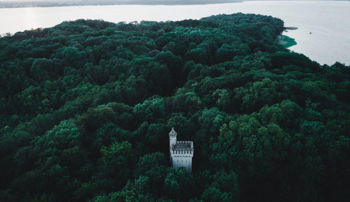 Den Wald vor lauter Bäumen nicht sehen: Auf Kaninchenwerder ist die Vegetation mitunter so dicht, dass man den Aussichtsturm erst sieht, wenn man genau vor ihm steht © Luca Jaenichen