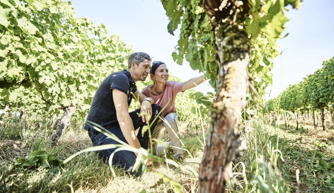 Im Rheingau werden hauptsächlich Riesling und Spätburgunder angepflanzt