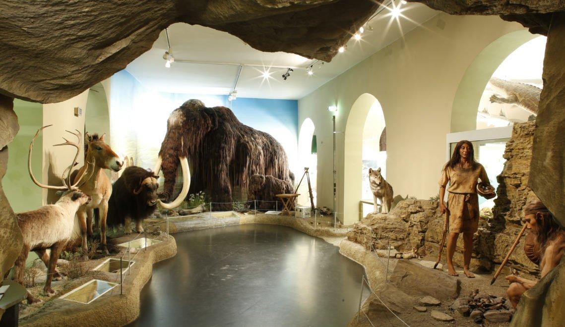 Auf Zeitreise im Naturkundemuseum Ottoneum