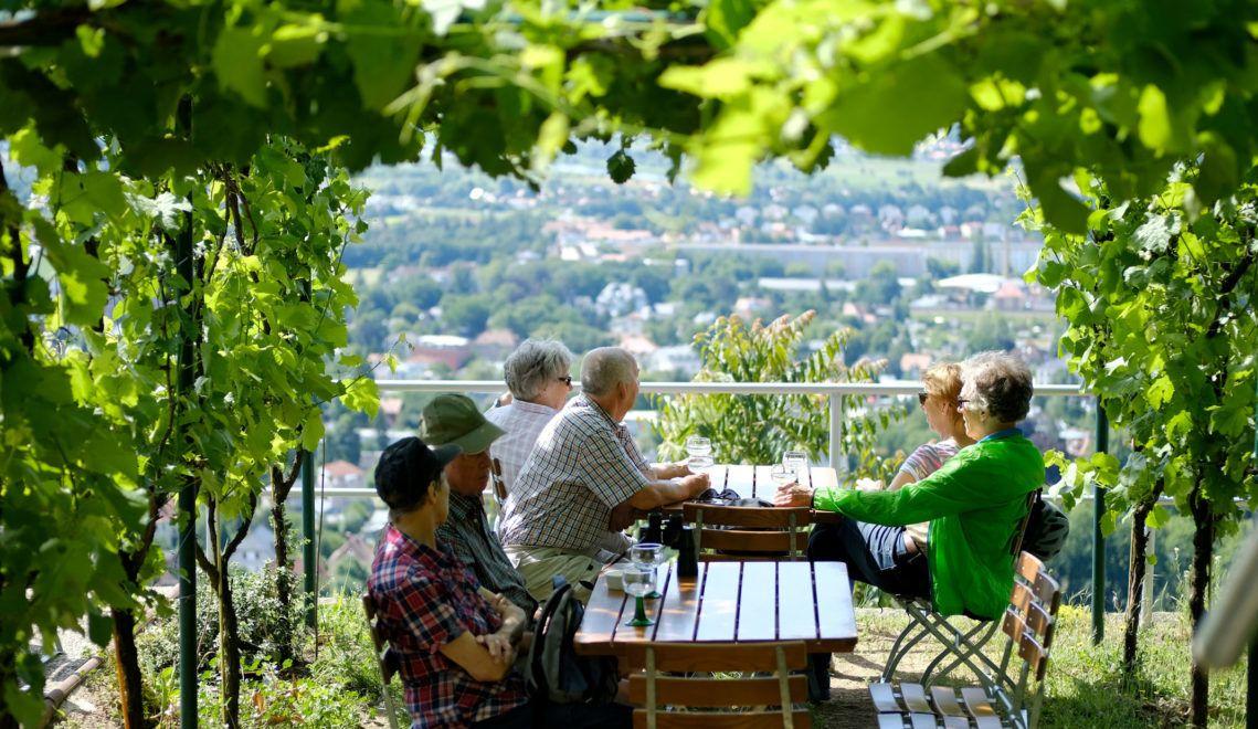 In den Weinbergen rund um Radebeul könnt ihr einen großartigen Blick und einen leckeren Tropfen genießen © Radebeul Tourismus