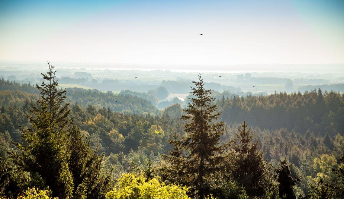 Vom Aussichtsturm Mordkuhlenberg hat man einen weiten Blick über die Dammer Berge